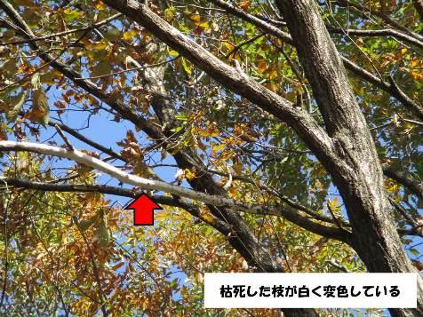 木のボディランゲージ3