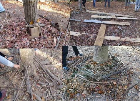 木のボディランゲージ4