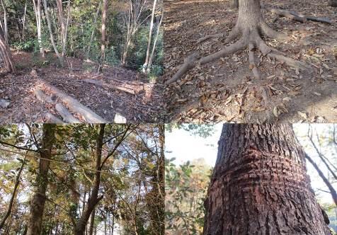 木のボディランゲージ5