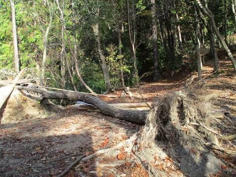 木のボディランゲージ6