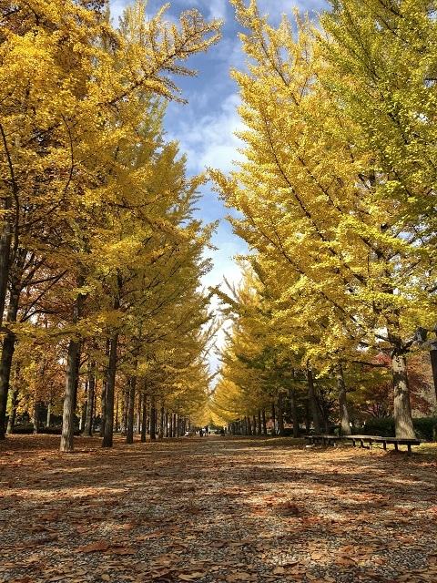 山形県総合運動公園 紅葉 2018 5