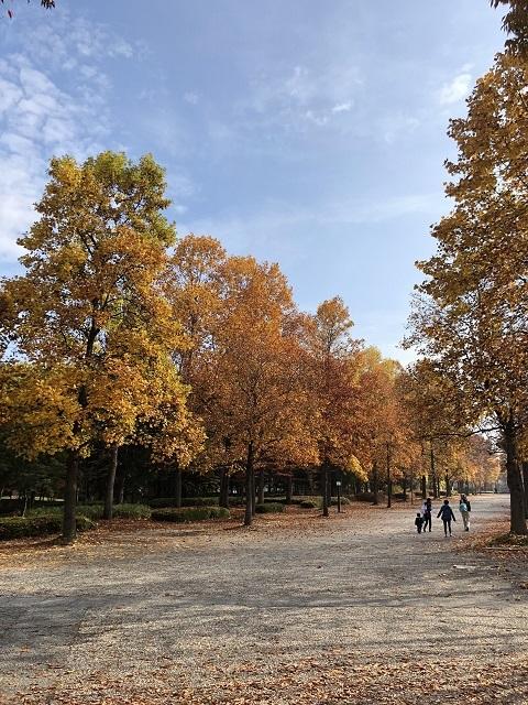 山形県総合運動公園 紅葉 2018 2