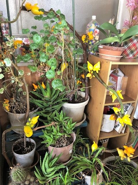 遠田食堂 植物