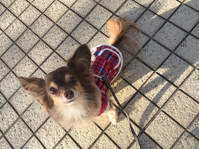 ギズモ自ら洋服を着る!!!