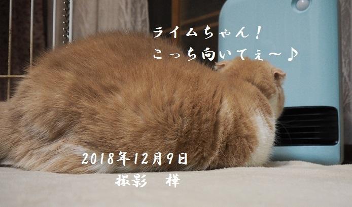 2018年12月9日ライム-pe