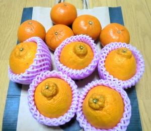 育ちの良さそうな柑橘たち