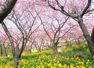 松田町桜まつり