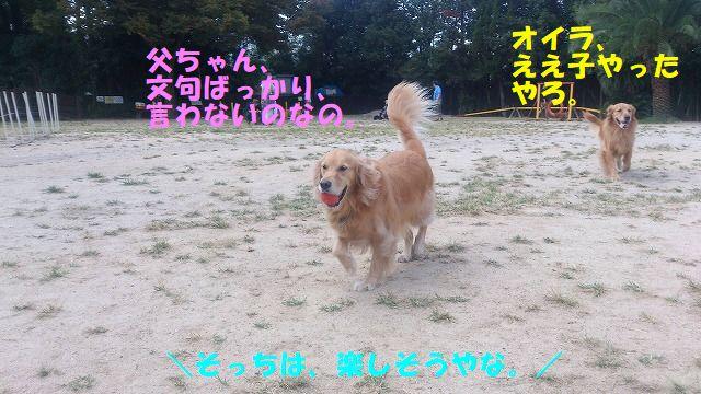 DSC_0222_201902042356127a1.jpg
