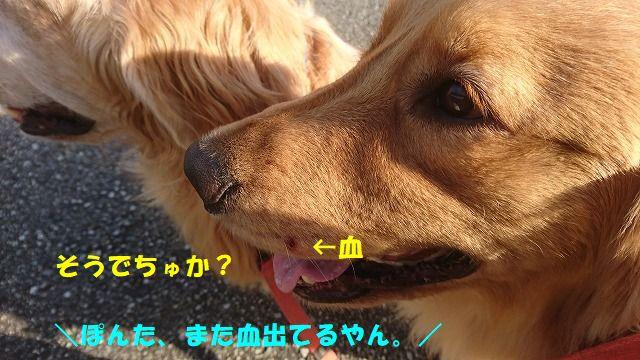 DSC_1041.jpg