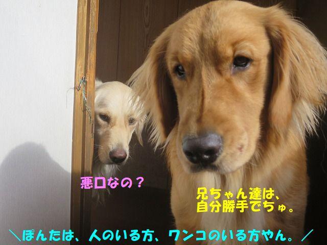 IMG_0269_20181126232102e9f.jpg