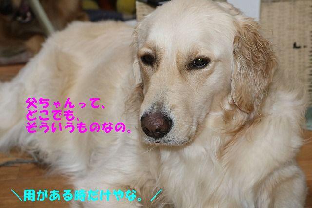 IMG_4529_20181119225226ea0.jpg