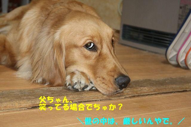 IMG_4766_20181206003652897.jpg