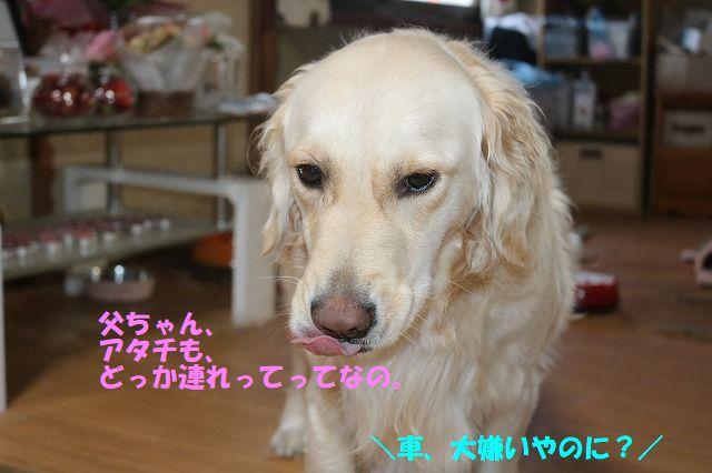 IMG_4945.jpg