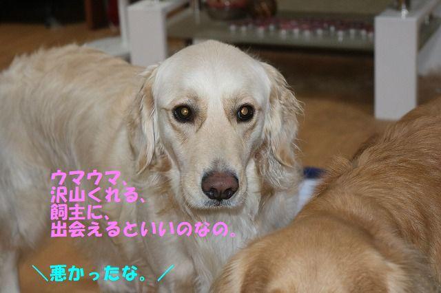 IMG_4985.jpg