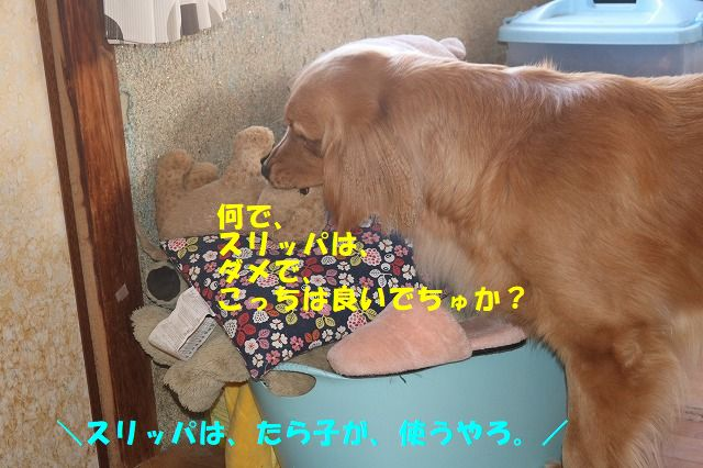 IMG_5079.jpg