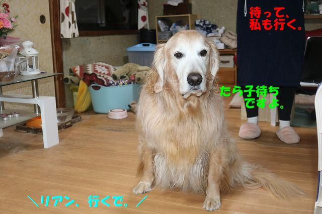 IMG_5304_20190112003208b6d.jpg