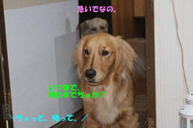 IMG_5305_20190112003210349.jpg