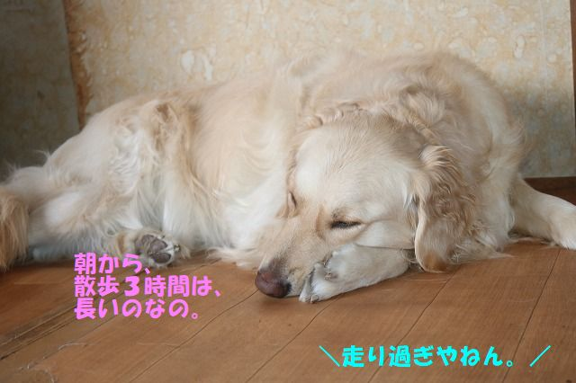 IMG_5375.jpg