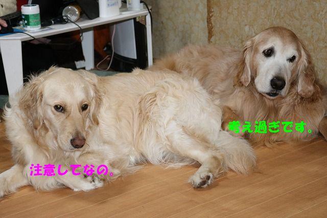 IMG_5999.jpg