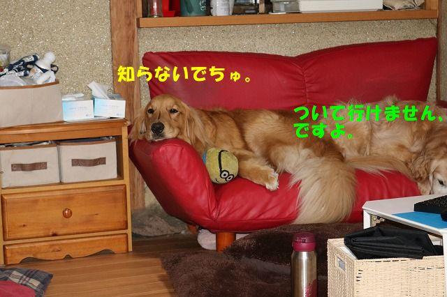 IMG_6022.jpg