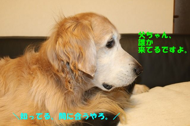 IMG_6131.jpg