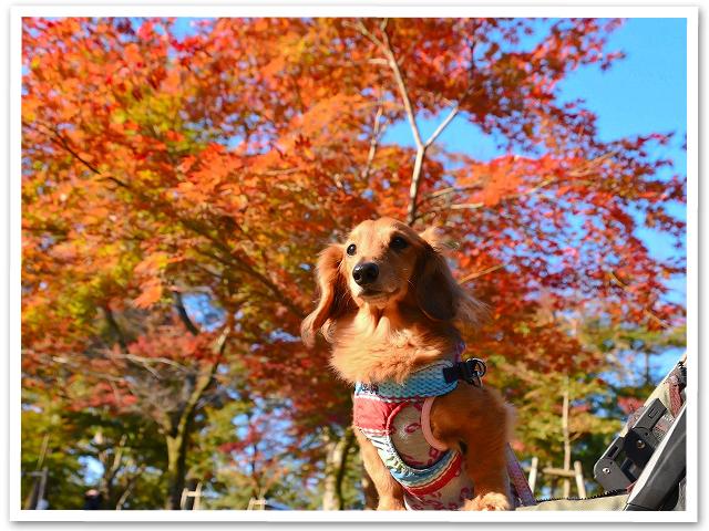 紅葉狩り☆長瀞