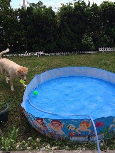 Pool①