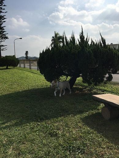Dog run1