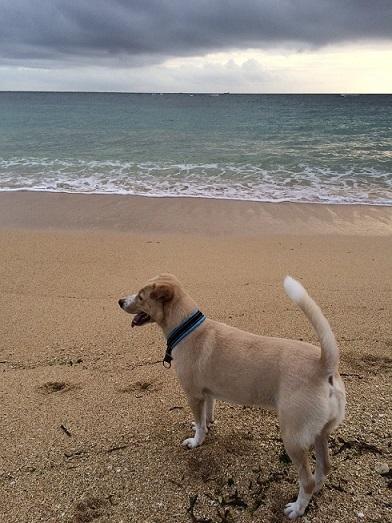 beach②