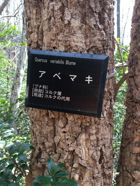 20190223薬草勉強会11アベマキちゃん