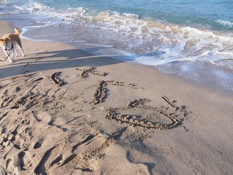 砂浜にさくら