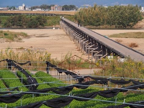 茶畑と流れ橋