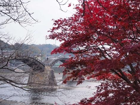 錦帯橋と紅葉