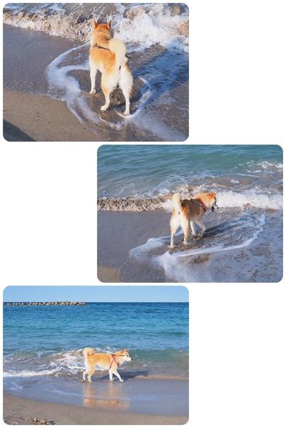 波と戯れる子