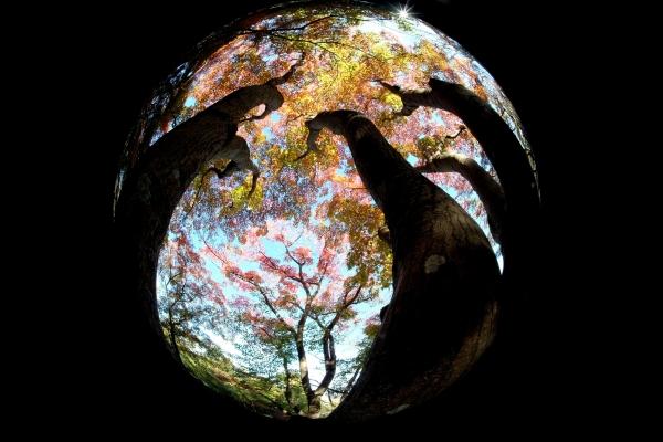 錦色に染まる地球