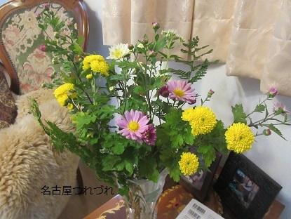 自宅菊の花