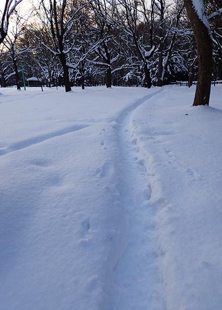 円山公園の雪小径01