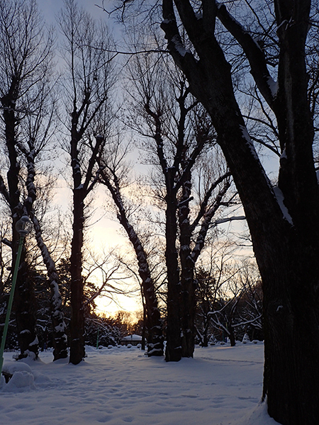 冷え込む円山公園02