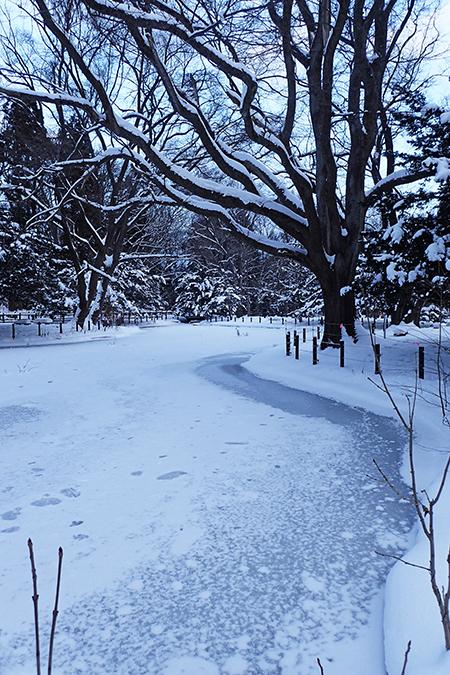 冷え込む円山公園03
