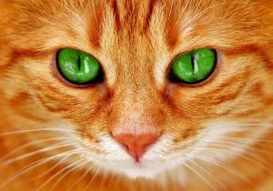 cat-2808675_960_720.jpg