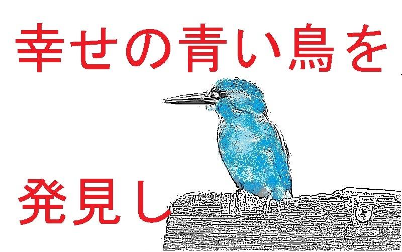 幸せの青い鳥をみつけたので