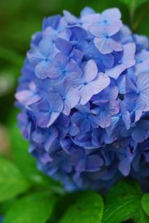六甲ブルー