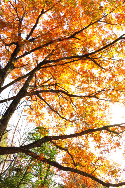 有馬富士公園の紅葉