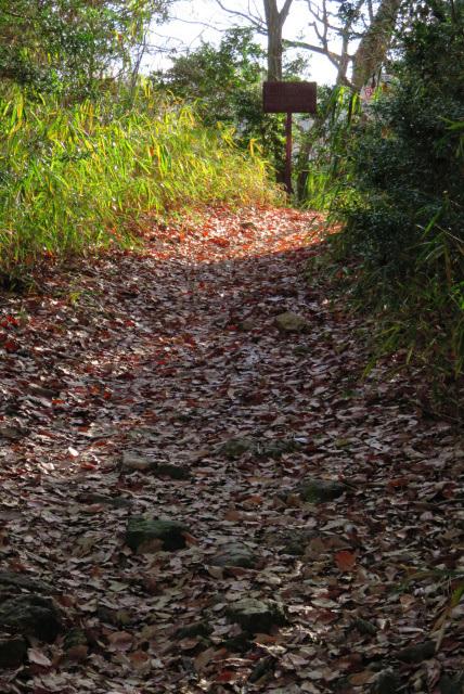 三草山登山道_落ち葉の道