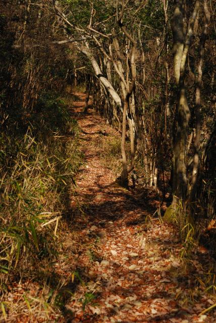 鹿野ルートから昭和池へ戻る登山道