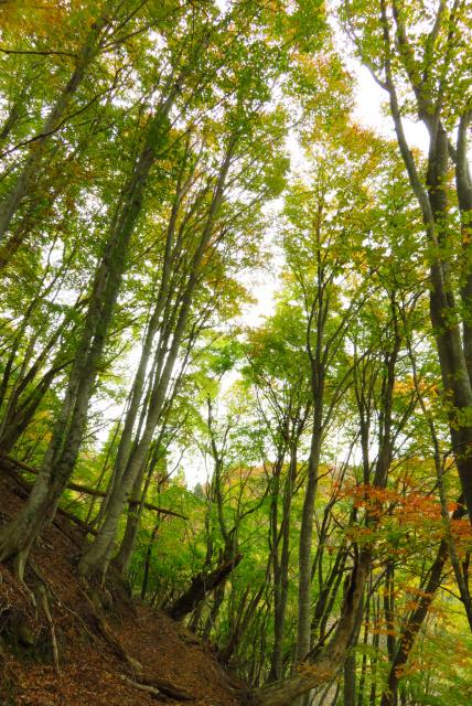 蘇武岳_巨樹の谷の上部