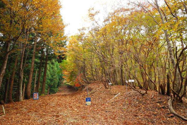 蘇武岳_名色林道と巨樹の谷の分岐