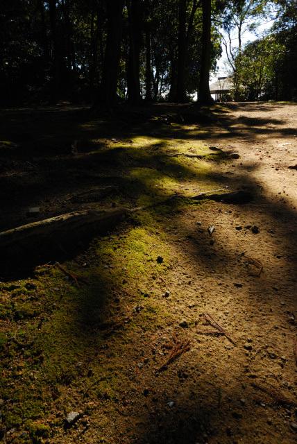 円教寺の境内_コケの道
