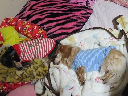 みんな毛布が大好き!!