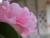 平成30年11月 お花